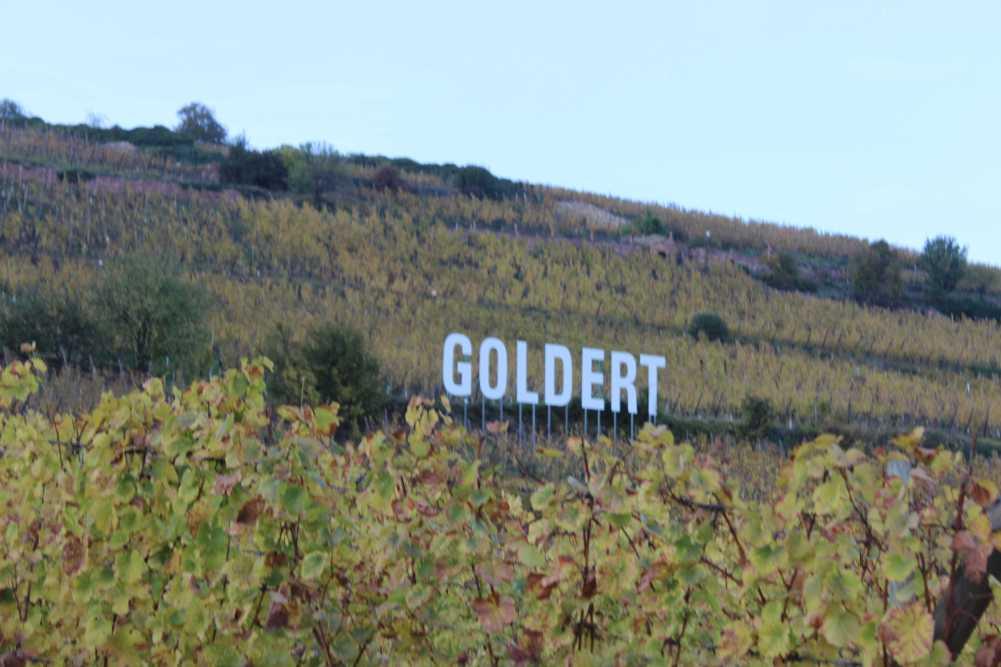 Der Goldert im goldenen Herbst