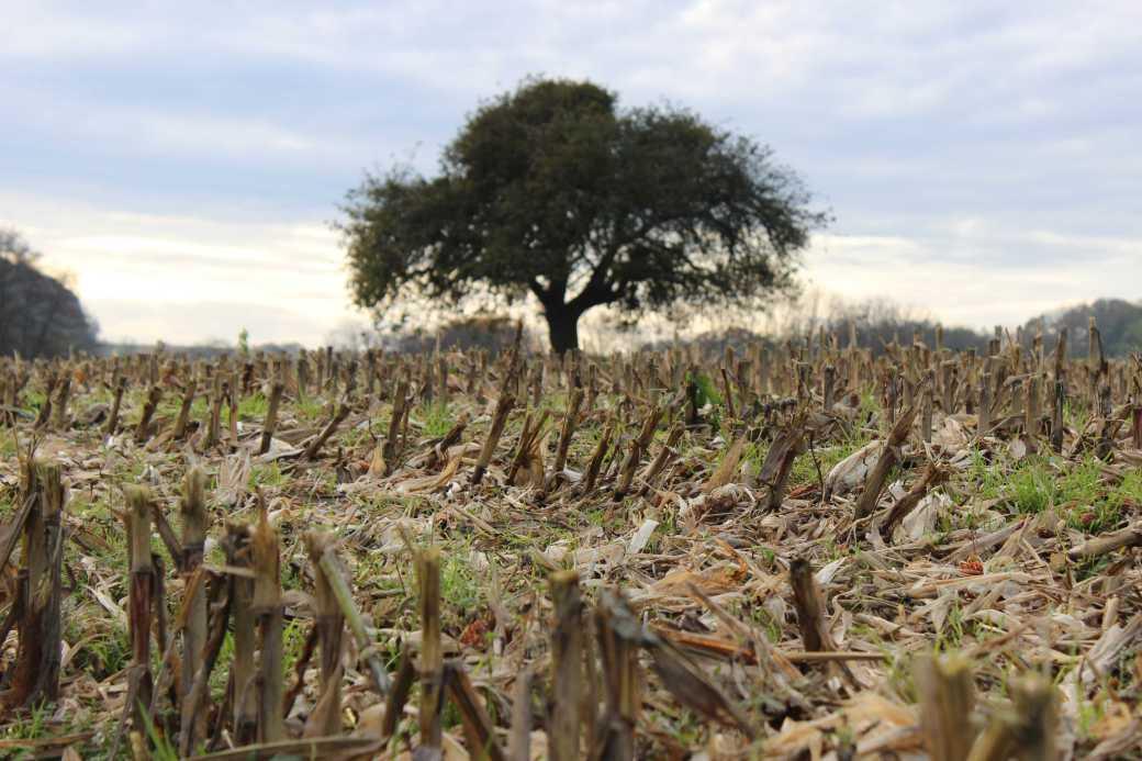 Einsam auf weiter Flur:  ein Baum