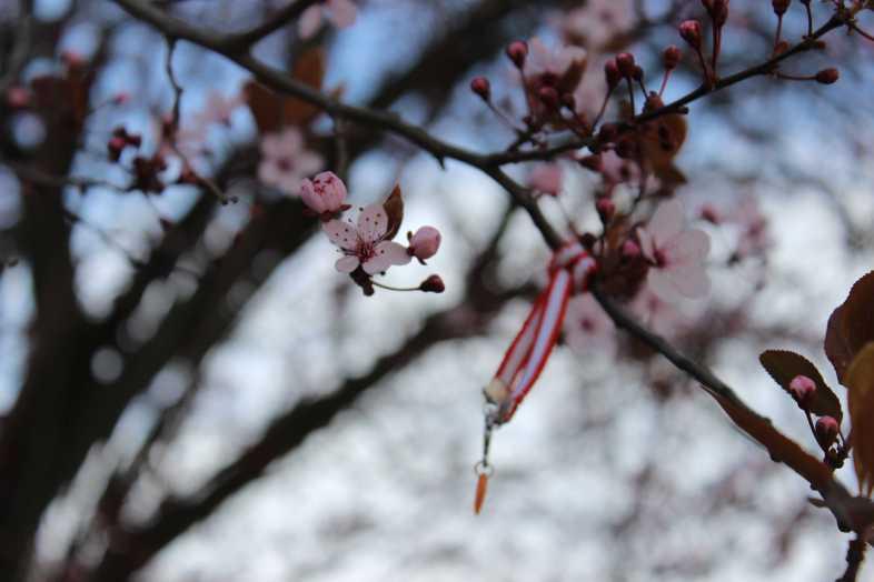 Mein Freund der Baum ist voller Blüten – und irgendjemand hat ihm Bändel in die Zweige gehängt. Ich weiß nicht, was soll es bedeuten. (Straßburger Kitsch, gesehen beim Goethe Denkmal.)