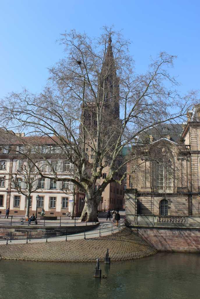 """Münsterblick mal anders. Weil jetzt die Bäume noch keine Blätter tragen, ist jetzt der goldrichtige Zeitpunkt um sich Straßburg mal etwas genau anzuschauen. Gerade in """"la Neustadt"""" gibt es etliche Häuser, die sonst das Jahr über hinter Baumkronen  versteckt sind. Aber auch das Münster ist jeden Augenblick wert."""