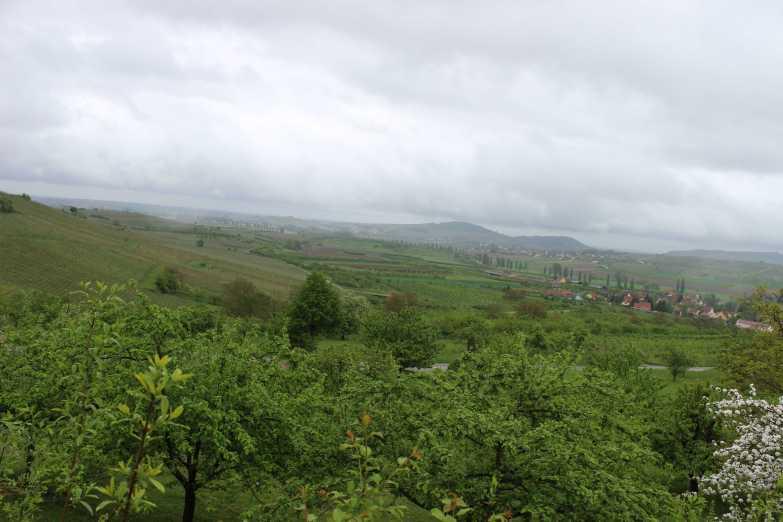 Das weite Land. Blick auf Westhoffen (re.) , Obst, Wein, etc.