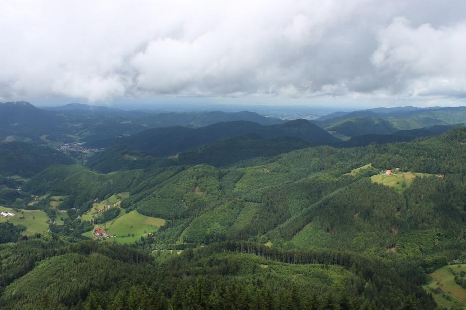 Die Berge, die Täler – und alles so schön grün hier. Die Ortenau und das Elsass vom neu gebauten Bucheckturm (Oppenau) gesehen. Dieser 28 m Weißtannenturm steht unweit der historischen Grenze Baden-Württemberg, die noch mit einem Grenzstein markiert ist. Au der einen Seite des Grenzsteins stehen die vier Buchstaben H.S.S.B. für Hochstift Straßburg. Nicht weit entfernt vom Turm ist die Oppenauer Steige, das wohl steilste Stück der Magistrale Paris-Wien und in alter Zeit auch ein Unruheherd. Schweden und Franzosen wollten hier im 17. Jhd. durch, mit wechselndem Erfolg. Heute ist über allen Gipfeln Ruh'.