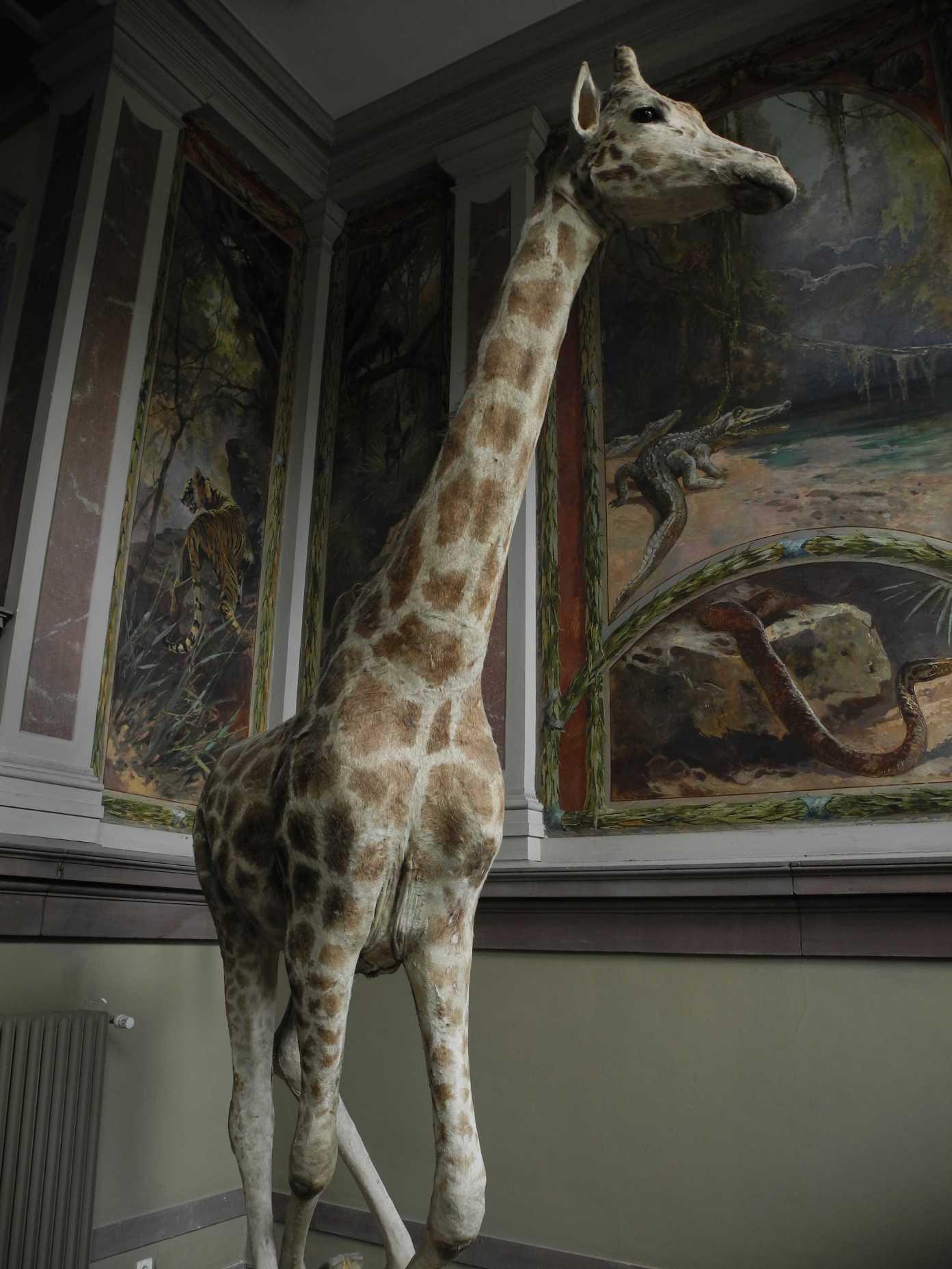 Zoologisches Museum, Treppenhaus